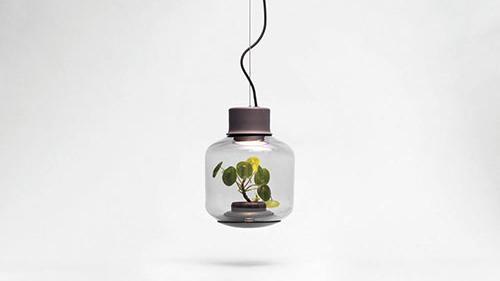 """Deco tendencias: """"Lámparas con ecosistemas autosustentables"""""""