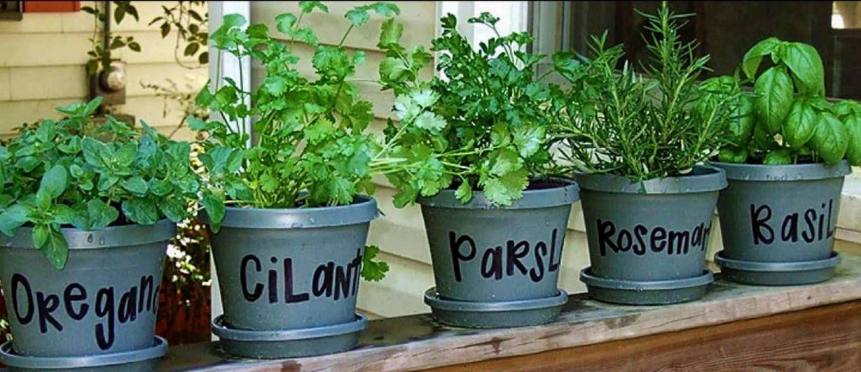 Plantas arom ticas puertas adentro - Plantas aromaticas en la cocina ...