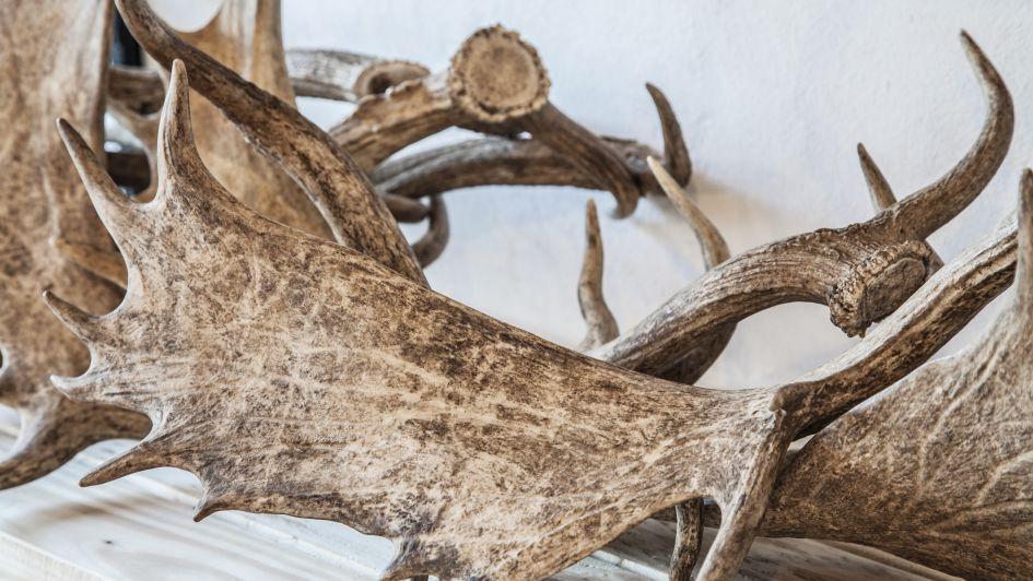 Objetos salvajes nacidos del reaprovechamiento y la ecología