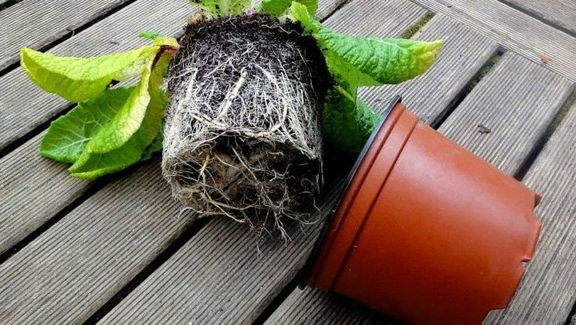 Consejos y tips para trasplantar las plantas recién compradas
