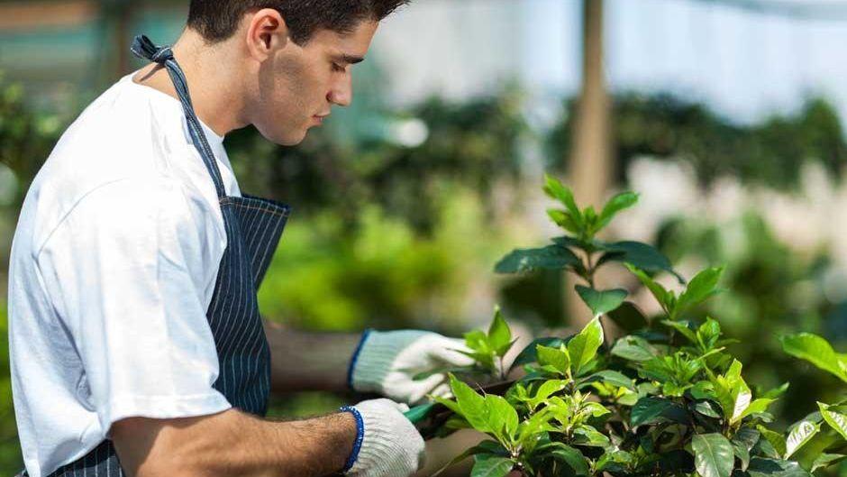 Los beneficios de podar los árboles de nuestro jardín