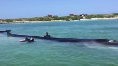 Más de 40 personas, entre pescadores, especialistas y personal turístico de la zona, participaron en las labores de rescate.
