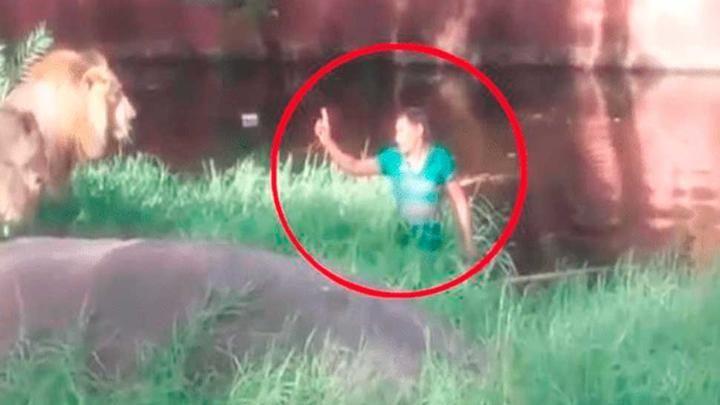 Video insólito: un hombre ebrio se metió a la jaula de los leones