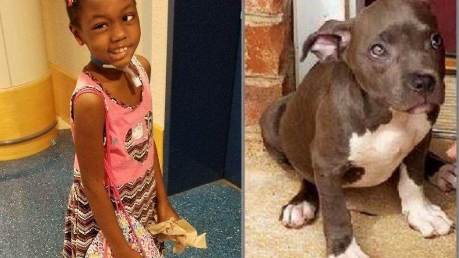 Una nena de 5 años tiene un tumor cerebral, le robaron su perra y pide que se la devuelvan