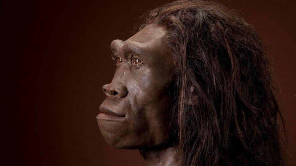 """Aseguran que el Homo erectus se extinguió por """"vago"""""""