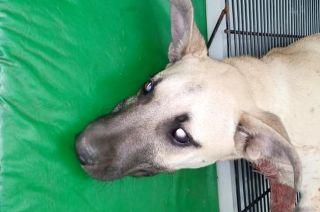 Greta, la perrita que murió tras recibir varias puñaladas.