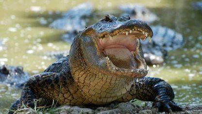 Las autoridades del estado solo han reportado el hallazgo de un cuerpo, aunque no han mencionado nada sobre los cocodrilos.