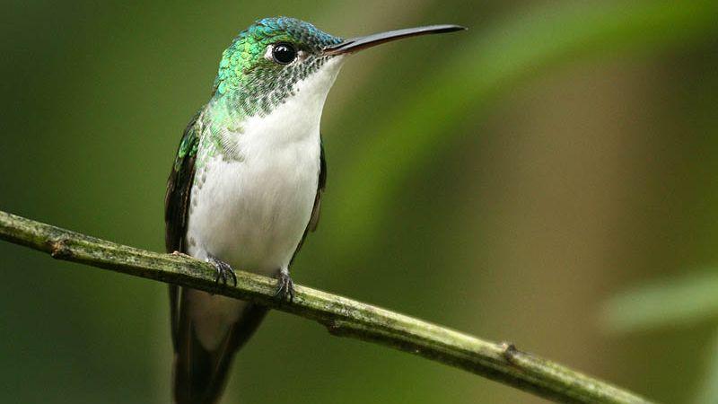 Un ritual de brujería está acabando con los colibríes en México