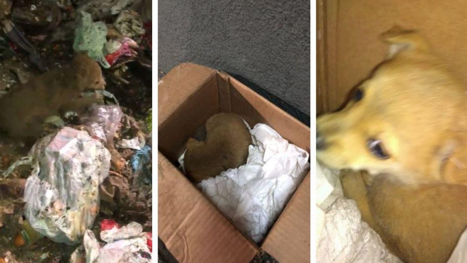 Un recolector le salvó la vida a una cachorrita