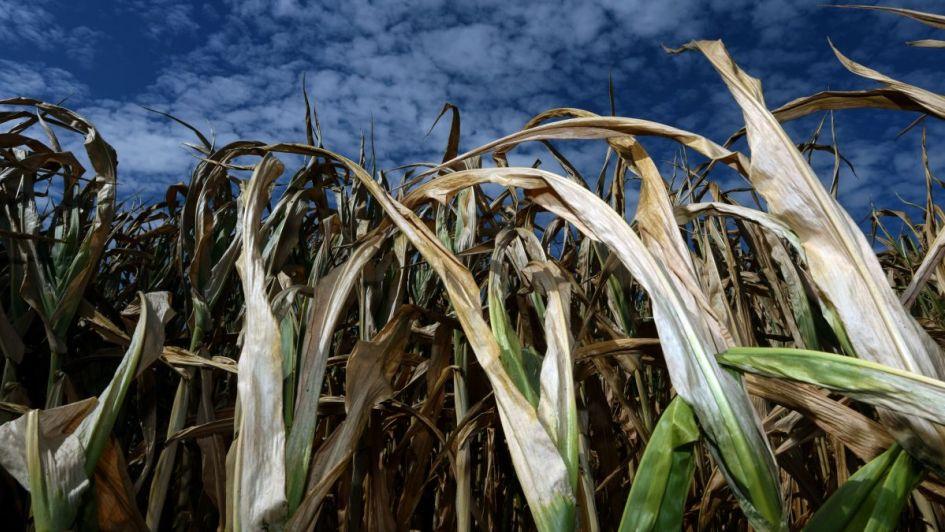 Prevé ONU posible fenómeno de 'El Niño' a fin de año