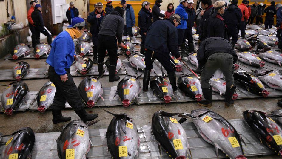 Cierra un enorme mercado en Tokio y ahora se preparan para una guerra contra las ratas