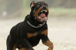 Bautista fue atacado por dos perros boxer y un rottweiler