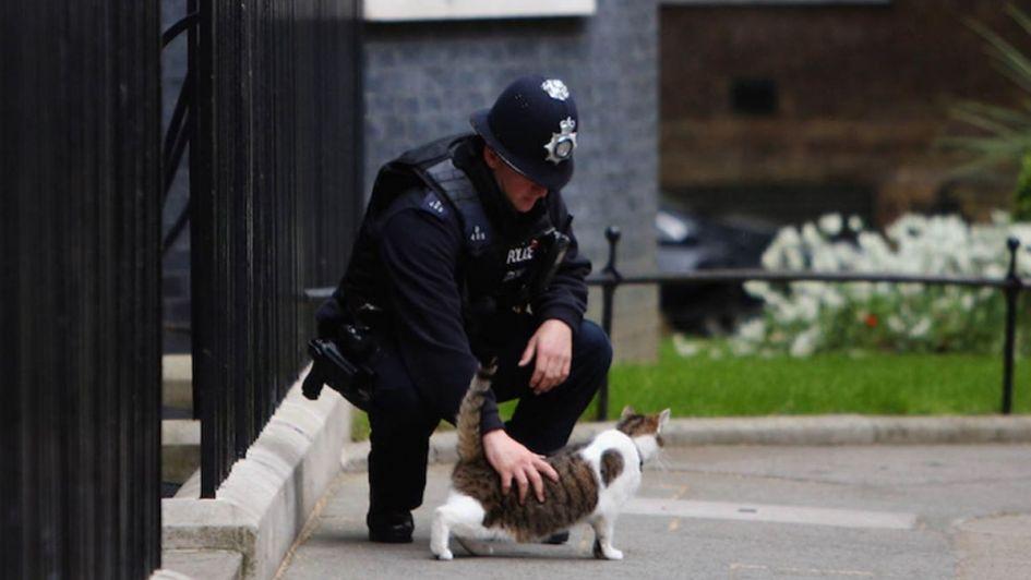 El asesino en serie de gatos en Londres resultó ser un zorro