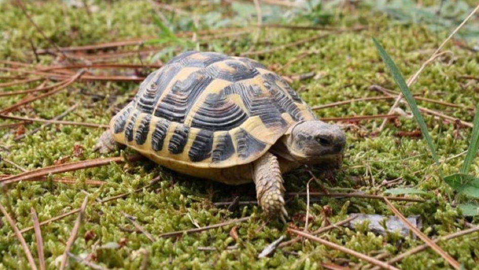 Una mujer se va de fiesta y acaba en urgencias con una tortuga metida en el choto