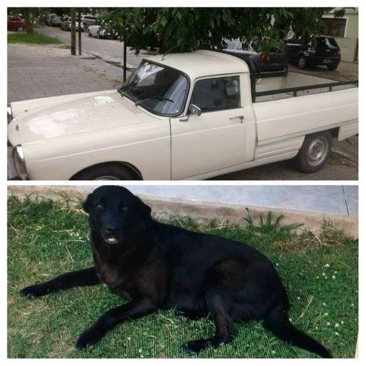 Su perra se extravió y ofrece su camioneta como recompensa — Desesperada búsqueda