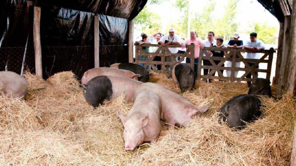 Se viene una nueva edición de Expo Cerdo