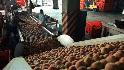 Hay preocupación sobre si se podrá trabajar esta temporada frutícola.