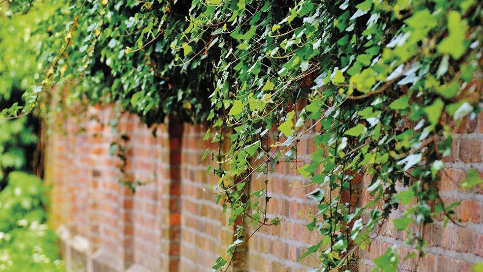 Plantas que visten paredes y embellecen estructuras