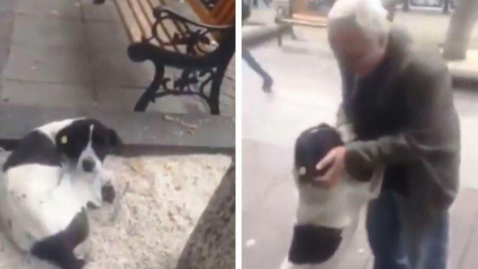 Emocionante video: encontró a su perro en la calle tres años después de haberlo perdido
