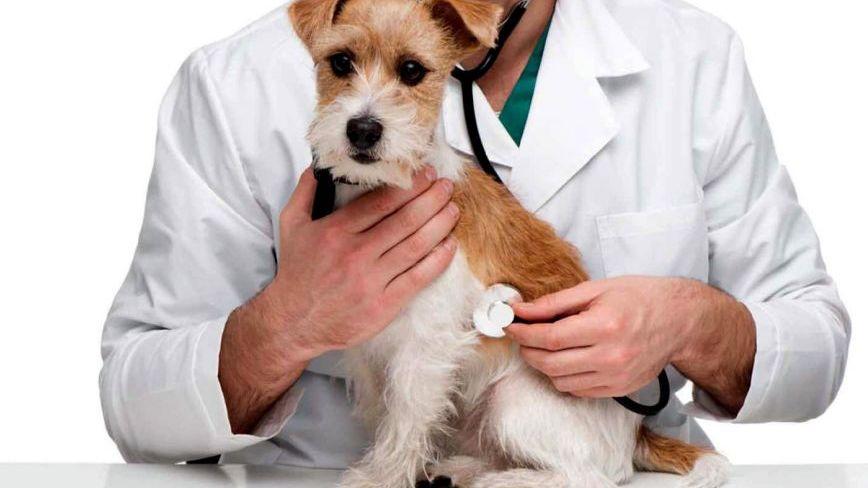 Alergia en perros: cómo tratarlas y prevenirlas