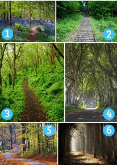 ¿Cuál es tu camino? Elige un sendero y descubre aspectos de tu personalidad