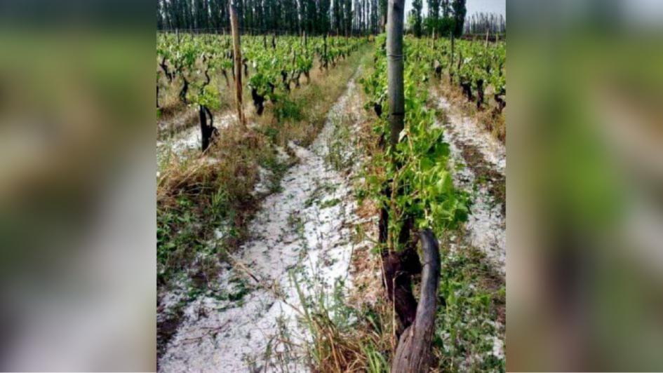 El granizo dejó pérdidas en cultivos de Santa Rosa