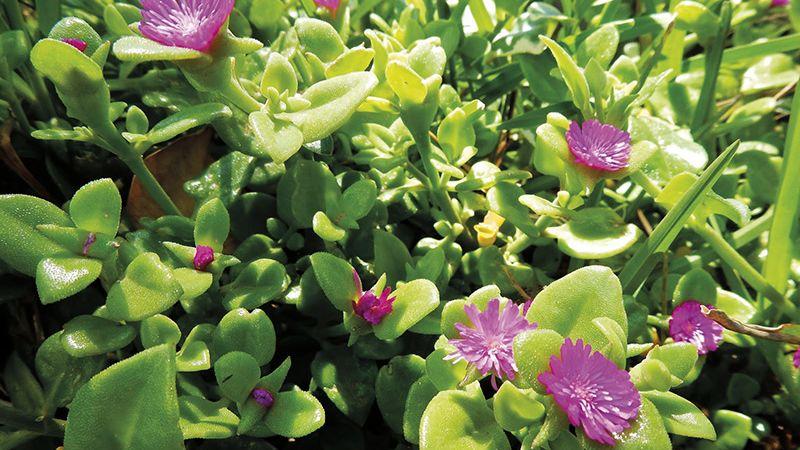Esas plantas que dan un toque más personal que el césped