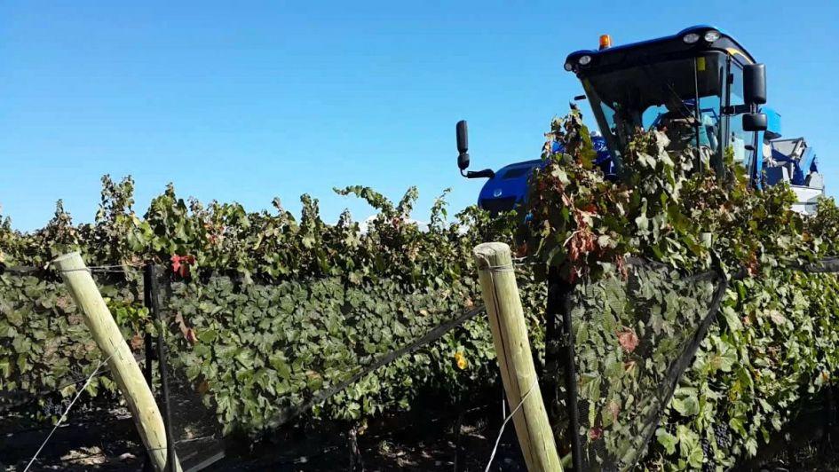 Economía impulsa financiamiento para la cosecha mecanizada de uva