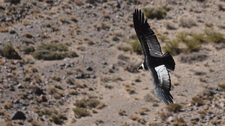 La necesidad de repensar el hábitat