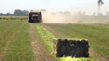 El forraje  destinado a la exportación no puede superar el 86 % de materia seca