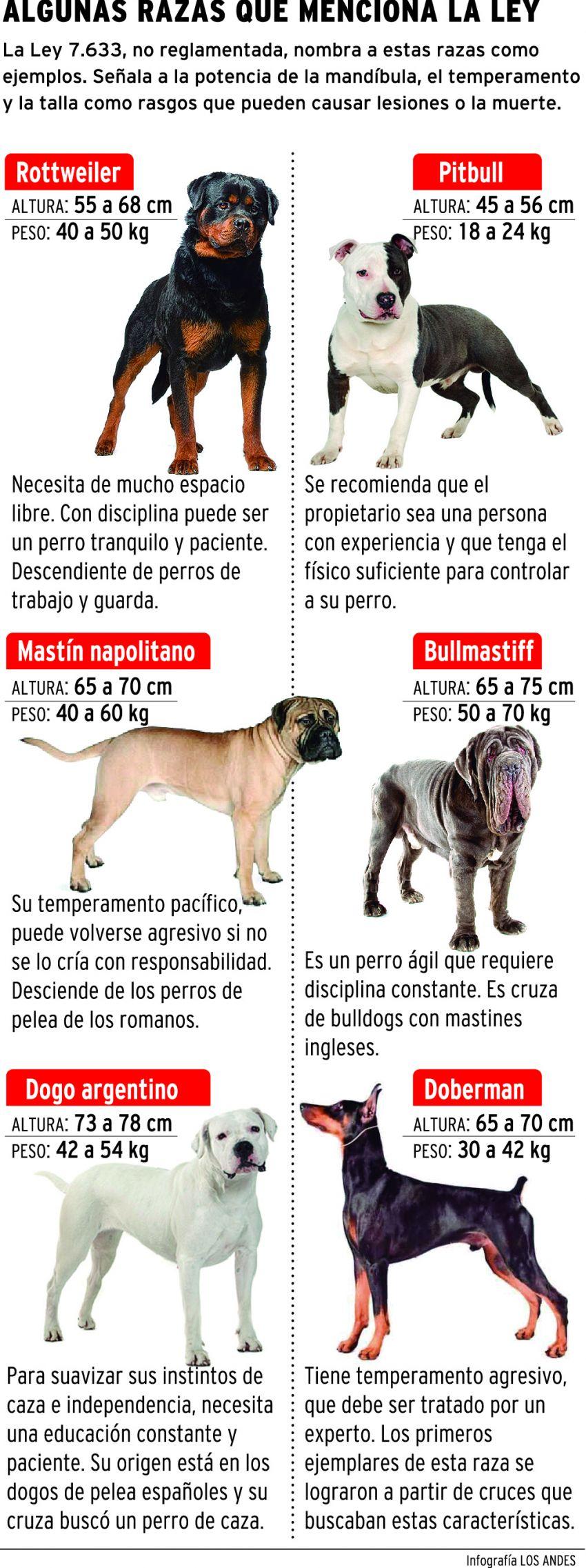 Sólo Hay 200 Perros Peligrosos Registrados En El Gran Mendoza
