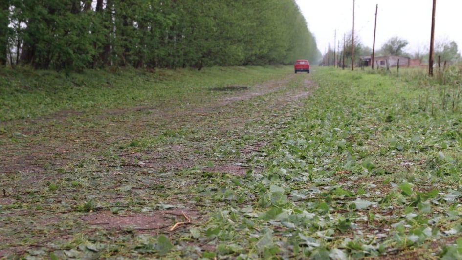 Graves daños en Alvear y parte de San Rafael por la tormenta de viento, lluvia y granizo