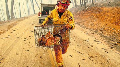 Salvataje. Un bombero rescataba unos gatitos del incendio forestal en Butte, condado de California.