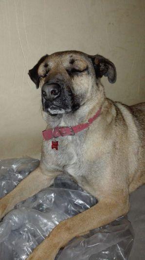 Simón, el perro que salvó a 3 niños de ser mordidos por una yarará en su casa