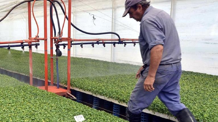 Hortalizas bajo cubierta: cada vez más productores cultivan en invernadero