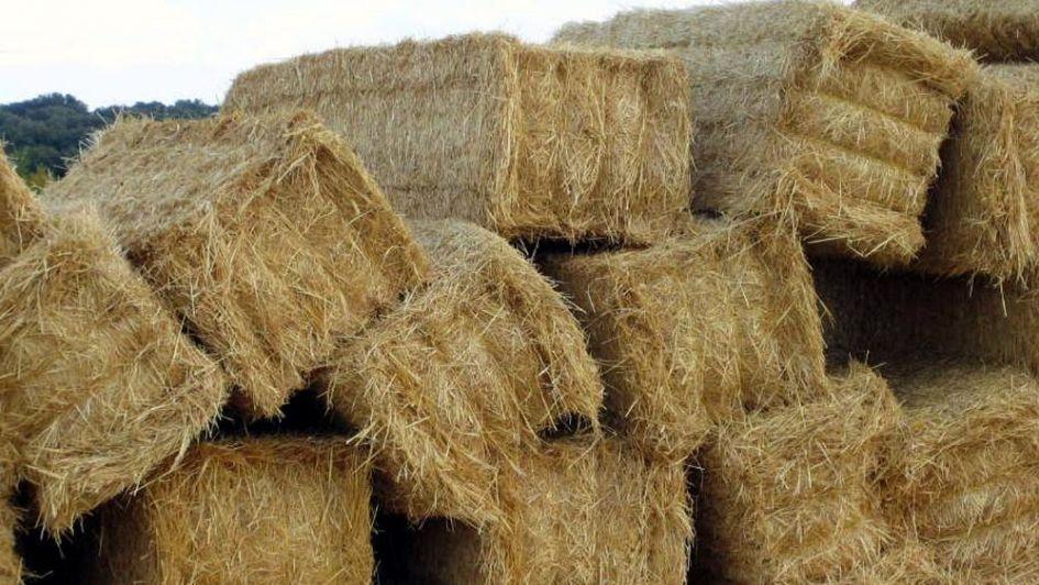 Elaboran protocolo para evaluar la calidad del heno de alfalfa