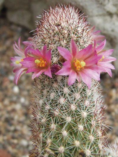 Flores y espinas