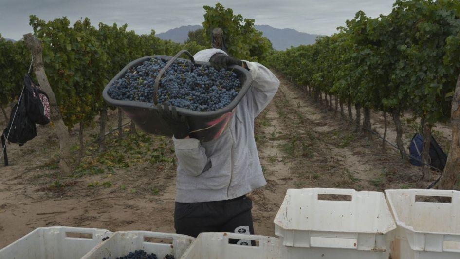 Bodegas prevén mayor cosecha y vaticinan baja de precios