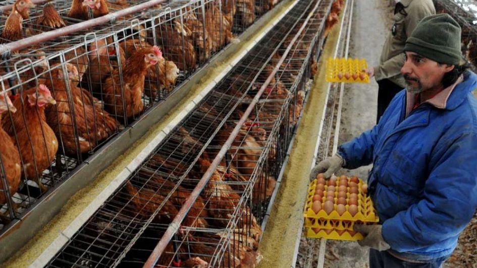 Destacan el repunte del sector avícola, con más exportaciones