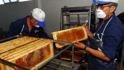 La provincia produce unas 1.500 toneladas de miel.