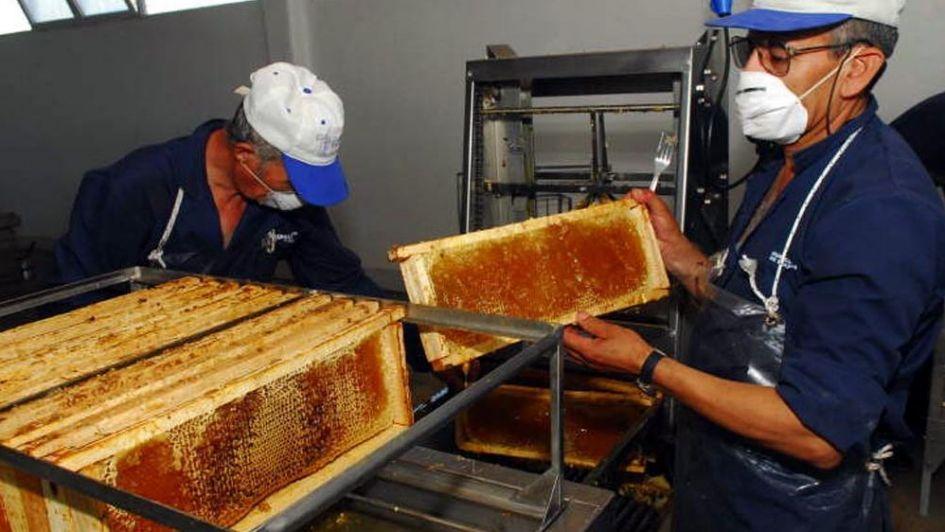 A partir de diciembre, toda la miel argentina deberá ser trazada