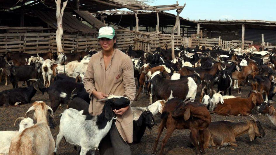 Sequía: el ganado caprino amenazado por la falta de forraje