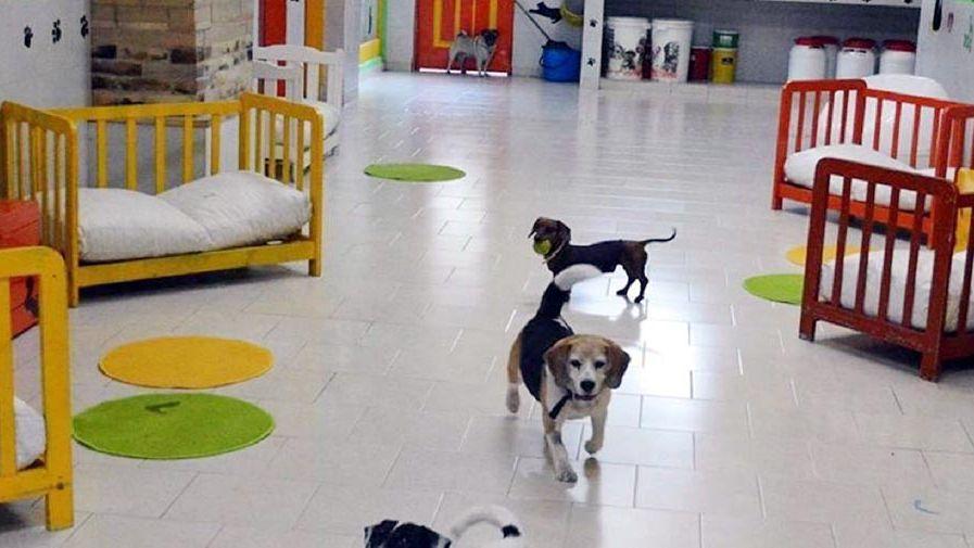El primer hotel para perros  de Booking.com es nacional