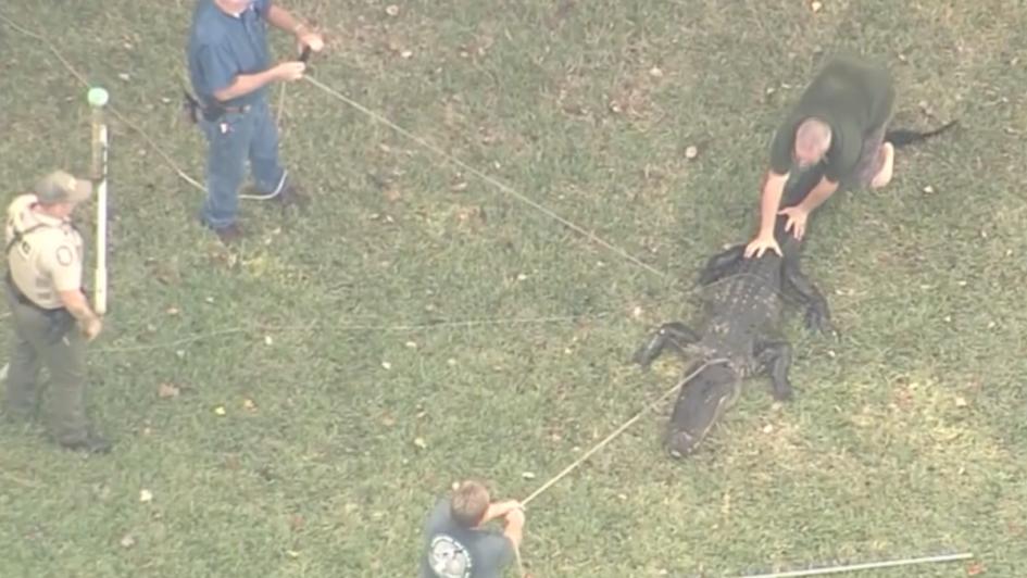 Estaba a la orilla de un lago en Florida y lo atacó un cocodrilo de más de  tres metros