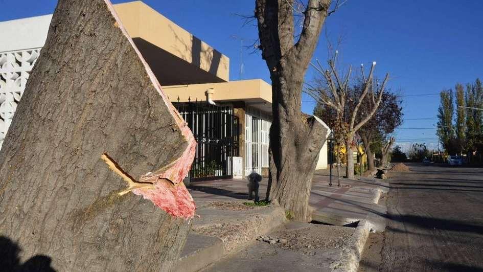 Habrá multas diez veces más caras para quienes dañen el arbolado público de Mendoza