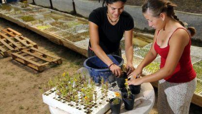 Romina y Daniela, dos jóvenes de Lavalle, elaboran plantines con asesoramiento de la UNCuyo.