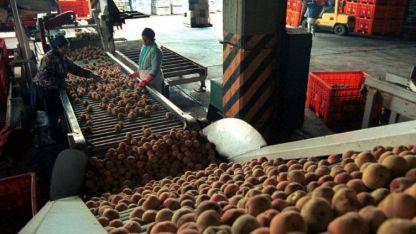 Fuente de trabajo. Ubicada en Tunuyán, Alco llega a emplear a 600 trabajadores en temporada.