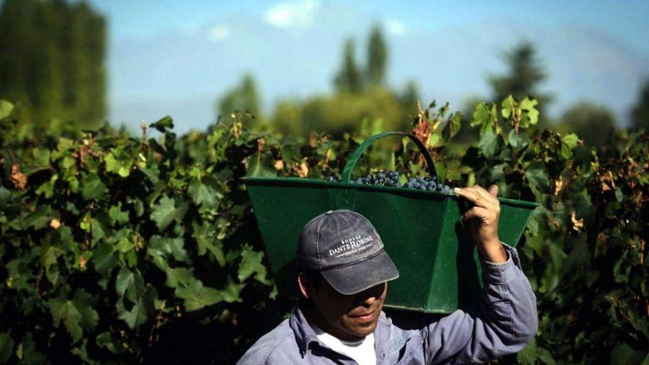 Costos: baja el margen de rentabilidad para los productores mendocinos