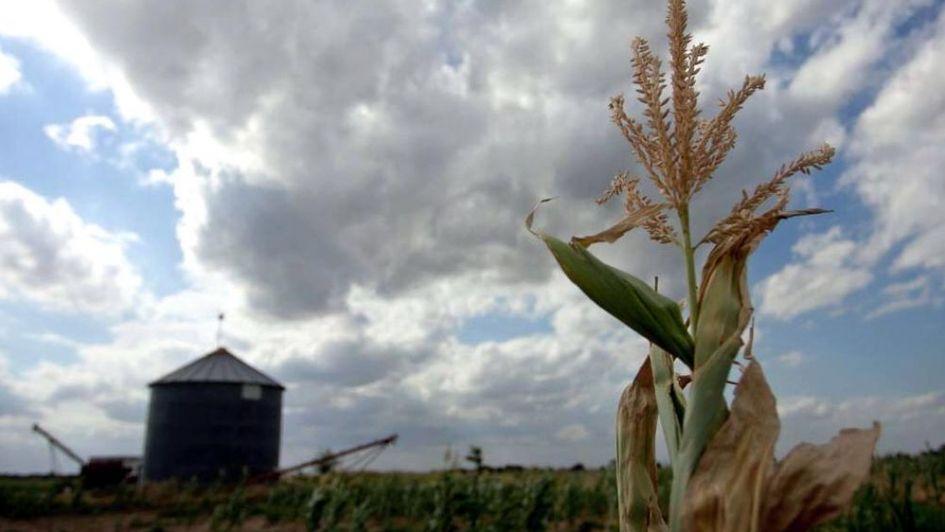Las cerealeras liquidaron casi 6% menos dólares en 2018