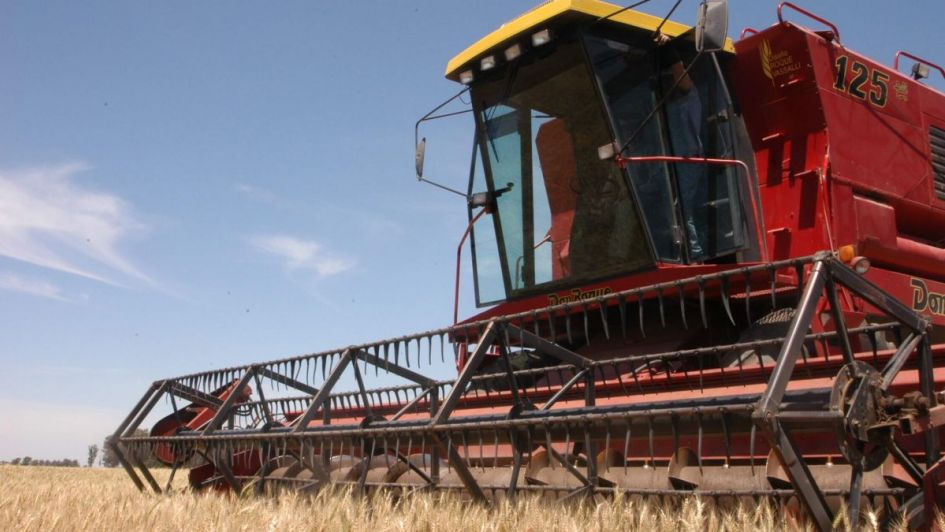 "Detectan ""estrés hídrico"" en la cosecha de trigo"